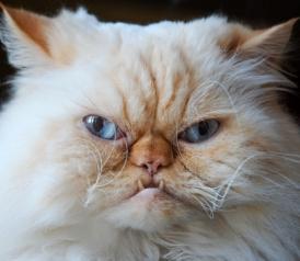 CatsAreEvil